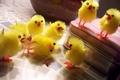 Картинка фантастика, сцена, цыплята, желтый