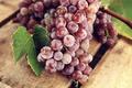 Картинка листья, красный, ягоды, виноград, грозди