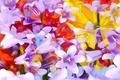 Картинка краски, цветы, рендеринг, лепестки, линии