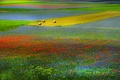 Картинка цветы, поле, луг, холмы, сено, трава