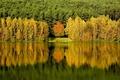 Картинка лес, вода, деревья, отражение
