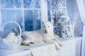 Картинка собака, хаски, белая