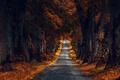 Картинка осень, деревья, дорога, большие