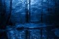 Картинка Зима, деревья, снег, синий, иней, холод