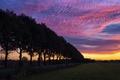 Картинка вечер, поле, деревья, закат