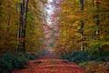 Картинка аллея, дорога, деревья, осень, лес, листья