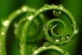 Картинка растение, лист, спираль, капли