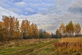 Картинка деревья, подмосковье, осень, пейзаж