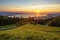 Картинка солнце, зелень, дорога, небо, трава, пейзаж