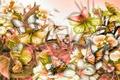 Картинка цветы, бабочки, мотылек, растения, природа, листья