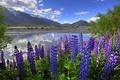 Картинка Новая Зеландия, озеро, горы, облака, люпин