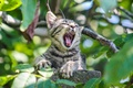 Картинка зелень, серый, котенок, ветки, зевает, листья