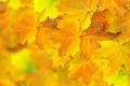 Картинка боке, осень, листья