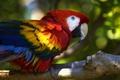 Картинка ветка, попугай, птица, ара