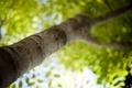Картинка листики, утро, дерево, свежесть, зелень, настроение, tilt-shift, ветки, bokeh wallpapers, leaf wallpapers, leaves wallpapers, макро ...