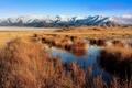 Картинка Новая Зеландия, трава, горы, Болото
