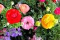 Картинка цветы, бутон, краски, лепестки, линии, листья