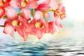 Картинка цветы, ветка, вода, орхидеи, розовый