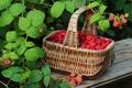 Картинка малина, nature, basket, food, еда, корзина, raspberries