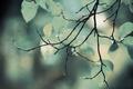 Картинка листва, зелень, ветка