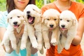 Картинка квартет, собаки, щенки