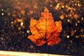 Картинка осень, лист, макро, боке