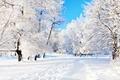 Картинка деревья, зима, снег, тропа