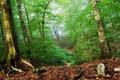 Картинка Лес, зеленый, листья
