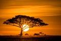 Картинка солнце, закат, дерево, саванна