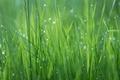 Картинка текстура, луг, растение, роса, трава, капли