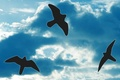 Картинка небо, контур, Птицы