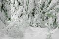 Картинка зима, снег, елки
