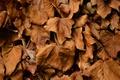 Картинка осень, сухие, листья