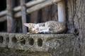 Картинка кошка, город, палки, спит, подоконник, бетон, коткнок