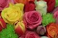 Картинка краски, розы, лепестки, бутон