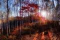 Картинка утро, осень, лес