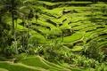 Картинка rice crops, planting, green mountains