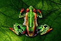 Картинка bodypainting, Frog, naked women, green leaf