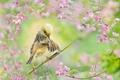 Картинка цветы, природа, тропики, птица, ветка, Золотоголовая цистикола