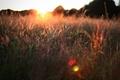 Картинка поле, лето, трава, солнце