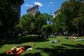 Картинка New York, lumia, lumia 1020, Central park, природа