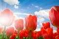 Картинка небо, облака, тюльпаны, красные, лучи солнца, крупным планом
