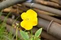 Картинка жёлтый, ржавчина, цветок