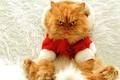 Картинка большой, рыжий, кот, злой, Новый год