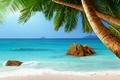 Картинка пальмы, paradise, vacation, берег, palms, sunshine, пляж, sea, море, песок, beach, summer, tropical, ocean, тропики