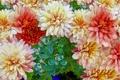 Картинка клумба, лепестки, рендеринг, сад