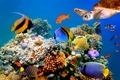 Картинка the sea bottom, the nature, природа, морское дно, рыбы, fish, черепаха, turtle