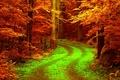 Картинка дорога, осень, лес, листья