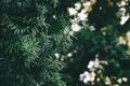 Картинка боке, зеленый, дерево, листья