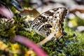 Картинка бабочка, макро, мох, крылышки